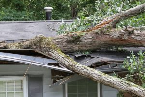 Storm & Wind Services