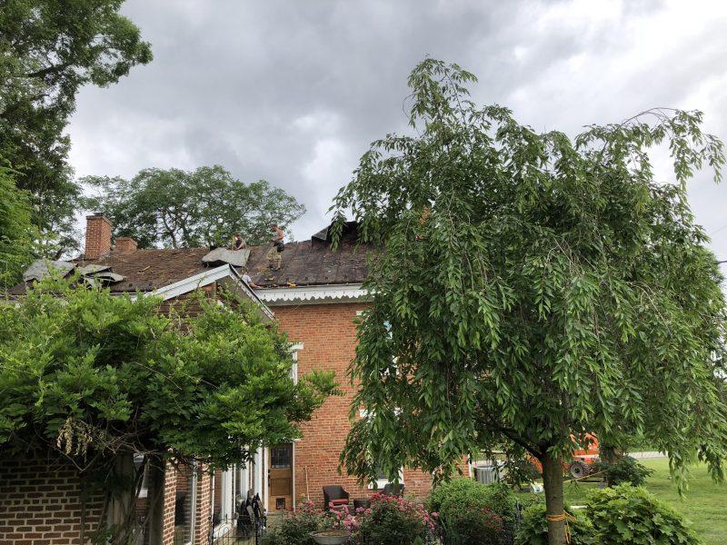 Massive tree fall restoration
